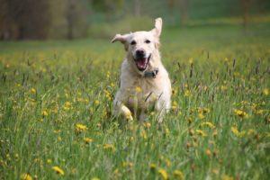 hund-freude